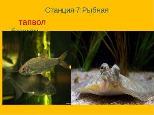 Станция 7:Рыбная тапвол балакам