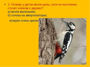 3. Почему у дятла мозги целы, хотя он постоянно стучит клювом о дерево? а) м