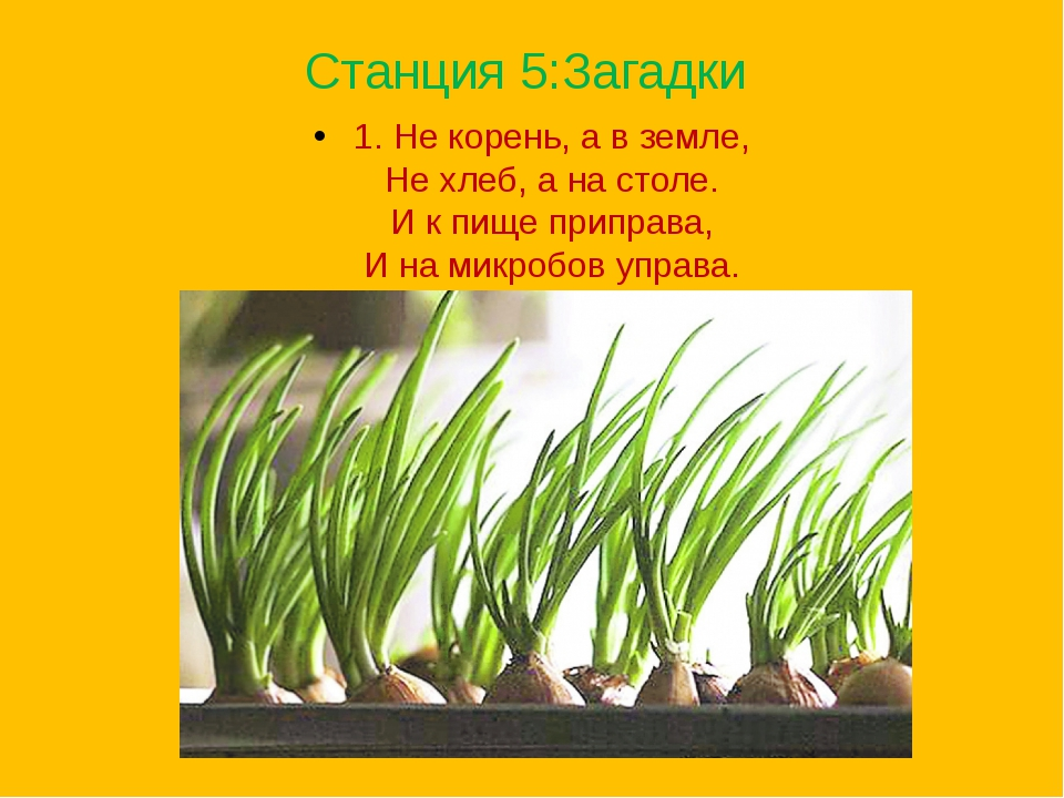 Станция 5:Загадки 1. Не корень, а в земле, Не хлеб, а на столе. И к пище пр...
