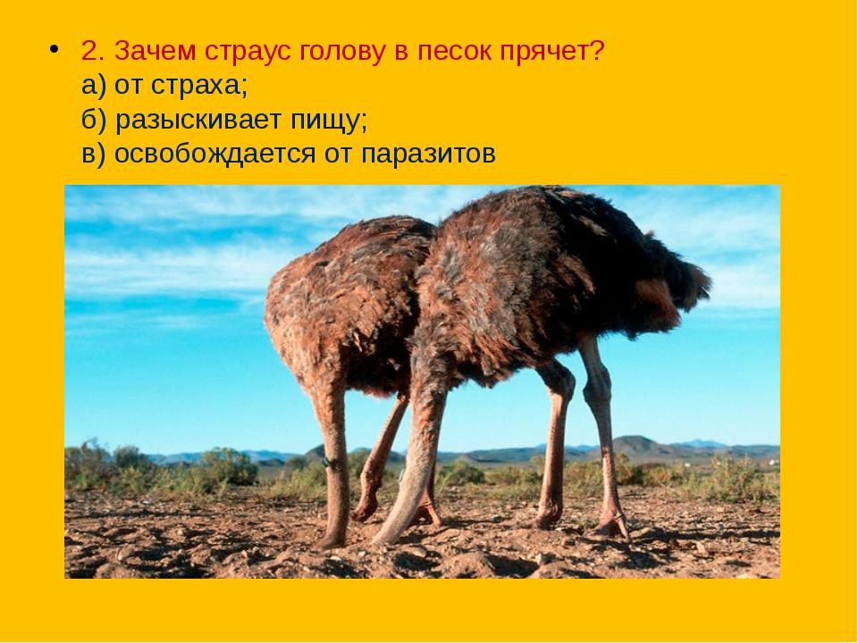 2. Зачем страус голову в песок прячет? а) от страха; б) разыскивает пищу; в...