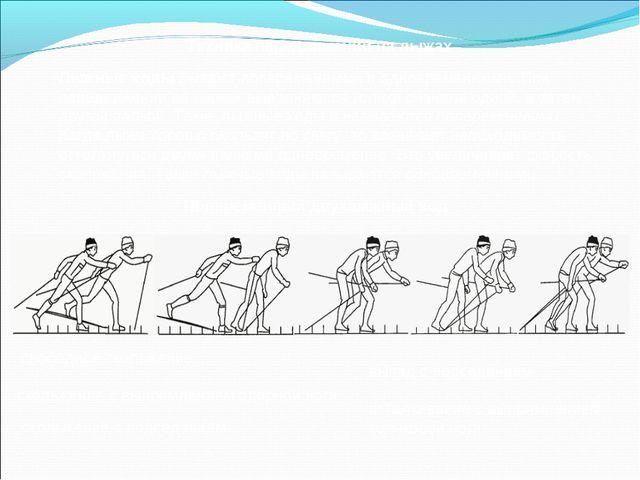 Техника передвижений на лыжах Лыжные ходы бывают попеременными и одновременны...