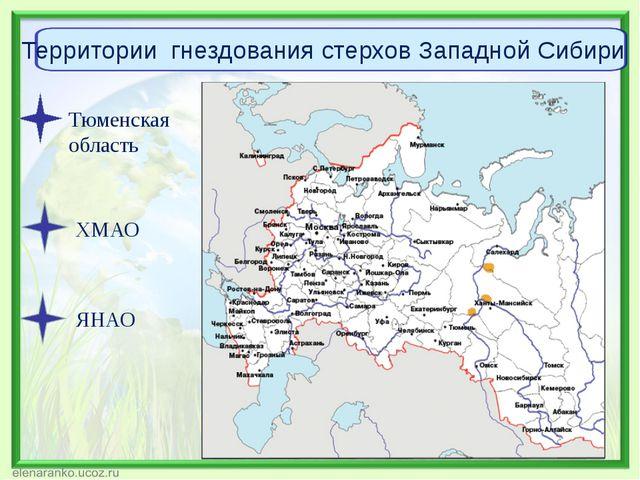 Тюменская область ХМАО ЯНАО Территории гнездования стерхов Западной Сибири