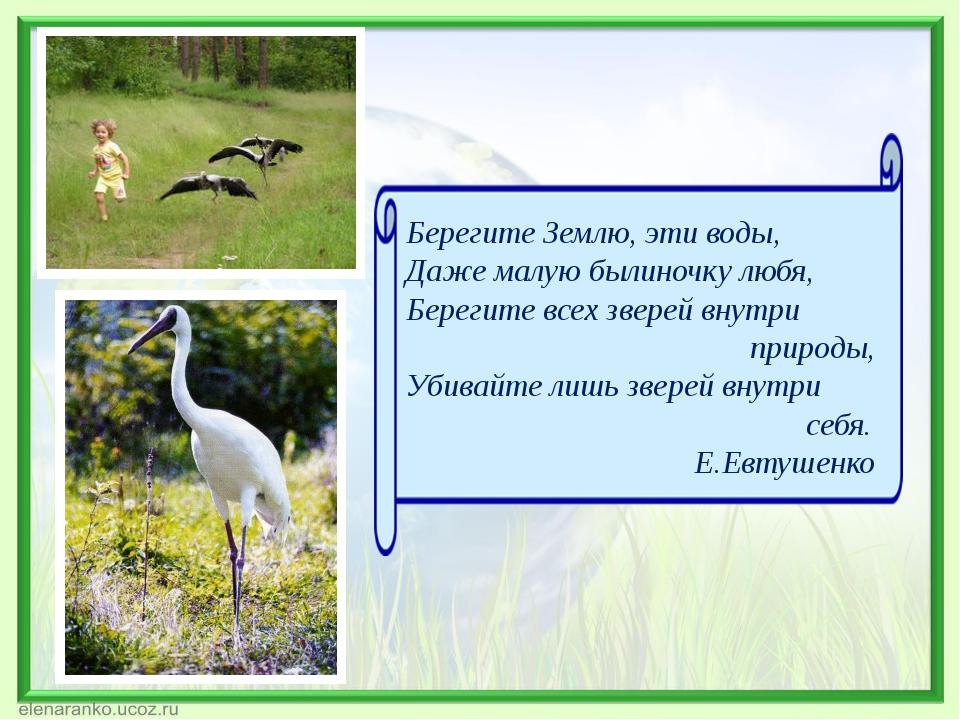 Берегите Землю, эти воды, Даже малую былиночку любя, Берегите всех зверей вну...