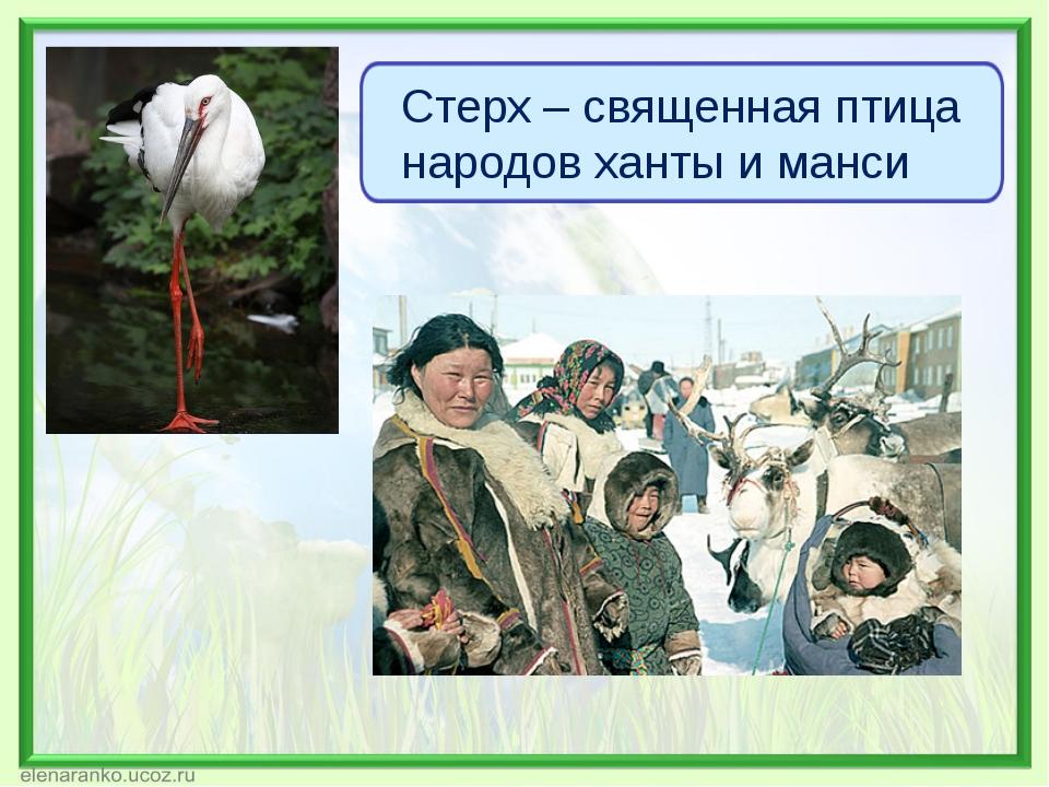 Стерх – священная птица народов ханты и манси