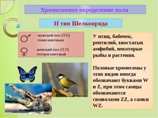 Хромосомное определение пола У птиц, бабочек, рептилий, хвостатых амфибий, не