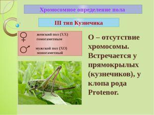Хромосомное определение пола III тип Кузнечика О – отсутствие хромосомы. Встр