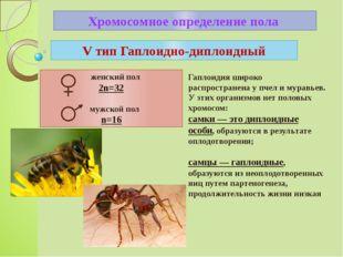 Хромосомное определение пола V тип Гаплоидно-диплоидный женский пол 2n=32 муж