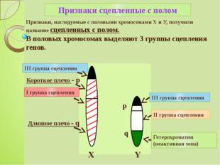 Признаки, наследуемые с половыми хромосомами X и У, получили название сцеплен