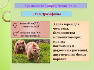 Хромосомное определение пола Характерен для человека, большинства млекопитающ