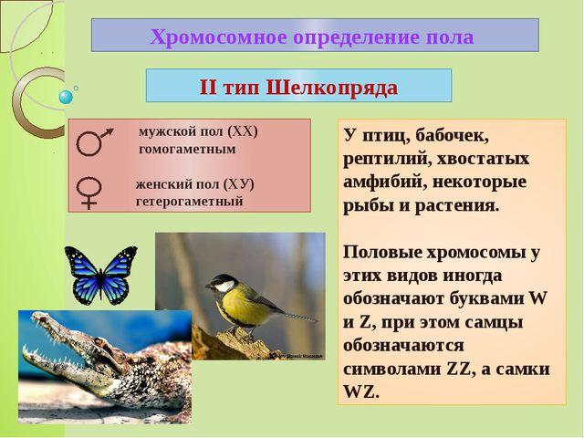 Хромосомное определение пола У птиц, бабочек, рептилий, хвостатых амфибий, не...