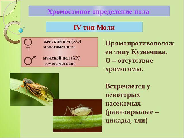 Хромосомное определение пола IV тип Моли Прямопротивоположен типу Кузнечика....