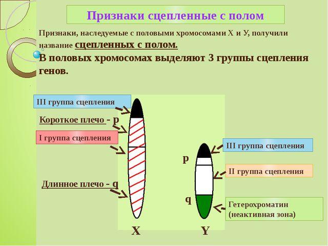 Признаки, наследуемые с половыми хромосомами X и У, получили название сцеплен...