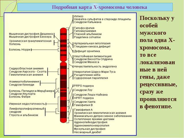 Подробная карта Х-хромосомы человека Поскольку у особей мужского пола одна Х-...
