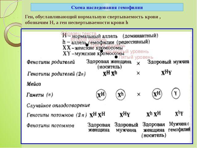 Схема наследования гемофилии Ген, обуславливающий нормальную свертываемость к...