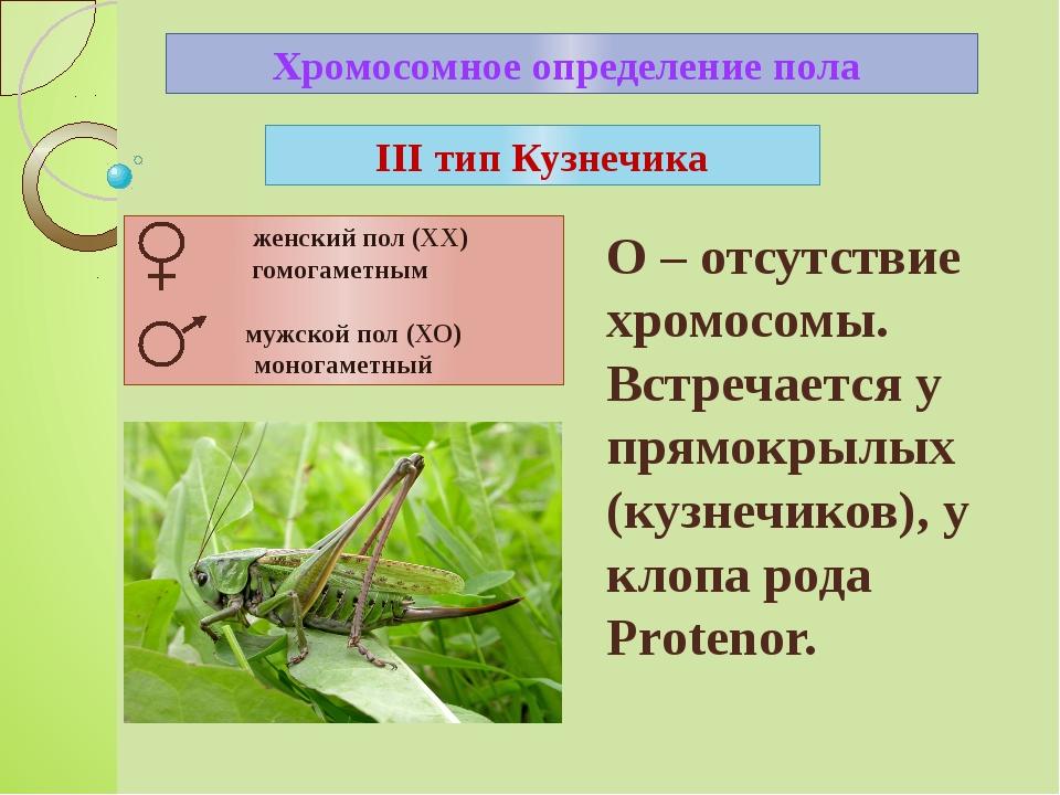 Хромосомное определение пола III тип Кузнечика О – отсутствие хромосомы. Встр...