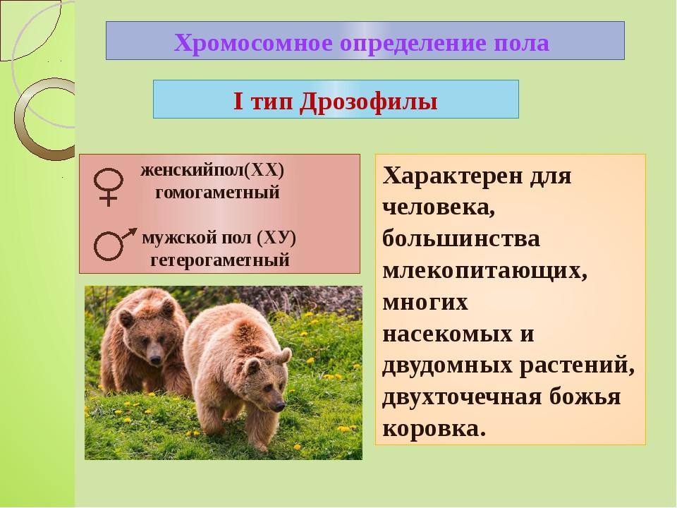 Хромосомное определение пола Характерен для человека, большинства млекопитающ...