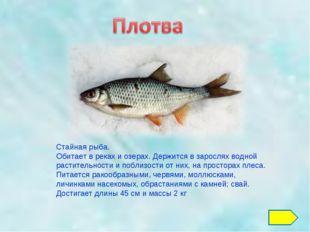 Стайная рыба. Обитает в реках и озерах. Держится в зарослях водной растительн