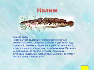 Хищная рыба. Предпочитает водоемы с чистой водой и песчано-каменистым дном. Д