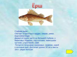 Стайная рыба. Обитает в проточных прудах, озерах, реках, водохранилищах . Дер