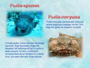 Голова рыбы очень похожа на морду кролика. Еще большее сходство придают ей не