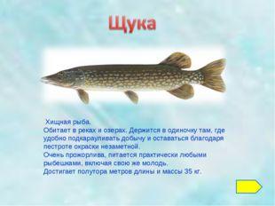 Хищная рыба. Обитает в реках и озерах. Держится в одиночку там, где удобно п