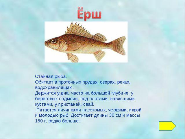 Стайная рыба. Обитает в проточных прудах, озерах, реках, водохранилищах . Дер...
