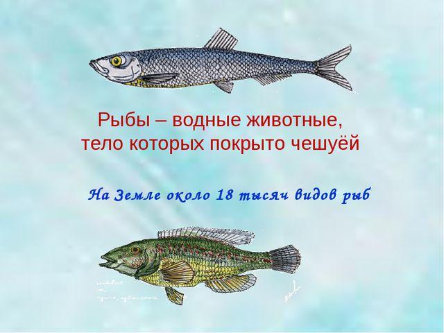 На Земле около 18 тысяч видов рыб Рыбы – водные животные, тело которых покрыт...
