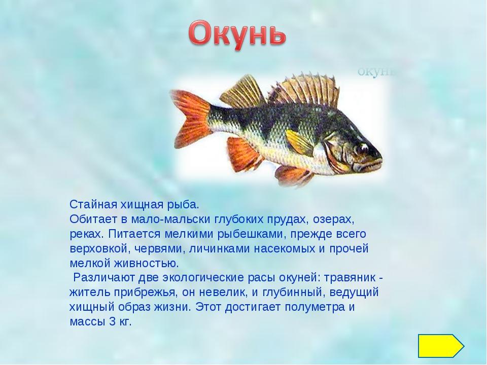 Стайная хищная рыба. Обитает в мало-мальски глубоких прудах, озерах, реках. П...