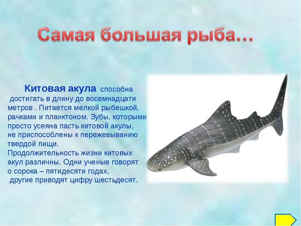 Китовая акула способна достигать в длину до восемнадцати метров . Питается м...