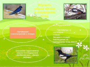 ИССЛЕДОВАНИЯ: Пословицы и поговорки о птицах. Загадки о птицах. Наблюдение з