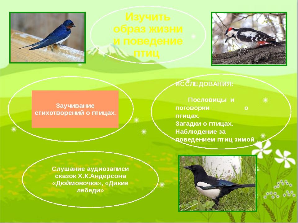ИССЛЕДОВАНИЯ: Пословицы и поговорки о птицах. Загадки о птицах. Наблюдение з...