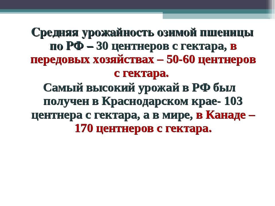 Средняя урожайность озимой пшеницы по РФ – 30 центнеров с гектара, в передов...