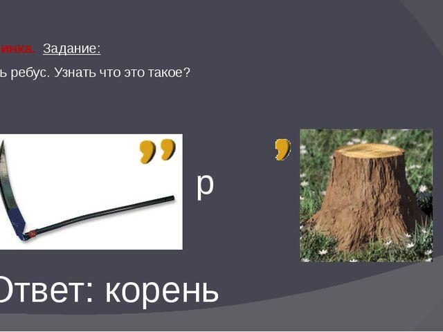 1 бусинка. Задание: Решить ребус. Узнать что это такое? р Ответ: корень