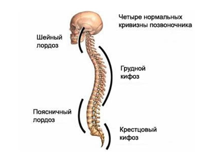 http://mediasubs.ru/group/uploads/kl/klub-zdorovya-dlya-teh-komu-za-sorok/image/1375855183-389581-28898.png