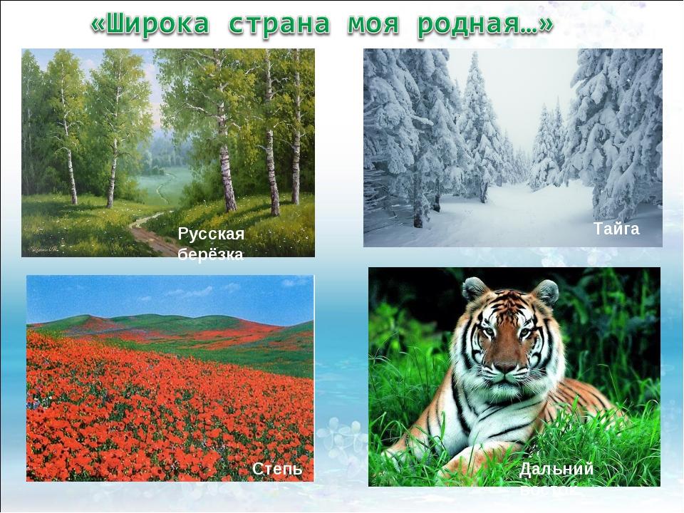 Русская берёзка Тайга Степь Дальний восток