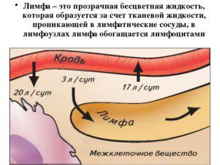 Лимфа – это прозрачная бесцветная жидкость, которая образуется за счет тканев