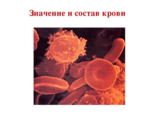 Значение и состав крови
