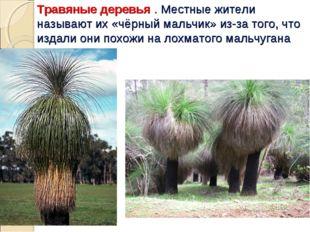 Травяные деревья . Местные жители называют их «чёрный мальчик» из-за того, чт