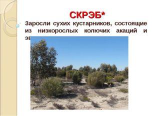 СКРЭБ* Заросли сухих кустарников, состоящие из низкорослых колючих акаций и э