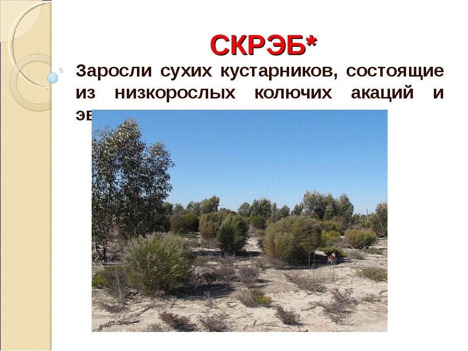 СКРЭБ* Заросли сухих кустарников, состоящие из низкорослых колючих акаций и э...