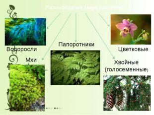 Разнообразие мира растений Водоросли Мхи Папоротники Хвойные (голосеменные) Ц