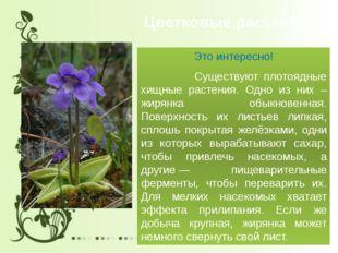 Цветковые растения Это интересно! Существуют плотоядные хищные растения. Одно