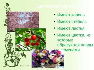 Цветковые растения Имеют корень Имеют стебель Имеют листья Имеют цветки, из к