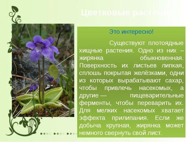 Цветковые растения Это интересно! Существуют плотоядные хищные растения. Одно...