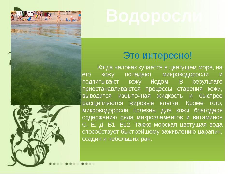 Водоросли Это интересно! Когда человек купается в цветущем море, на его кожу...