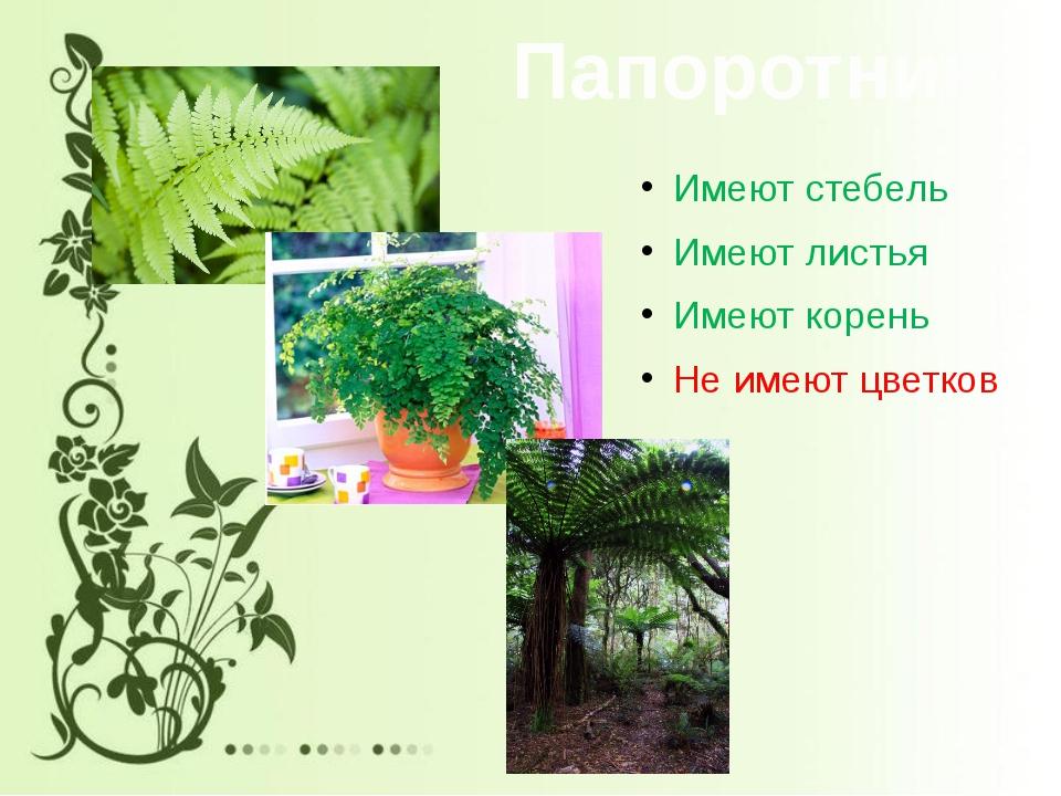 Папоротники Имеют стебель Имеют листья Имеют корень Не имеют цветков