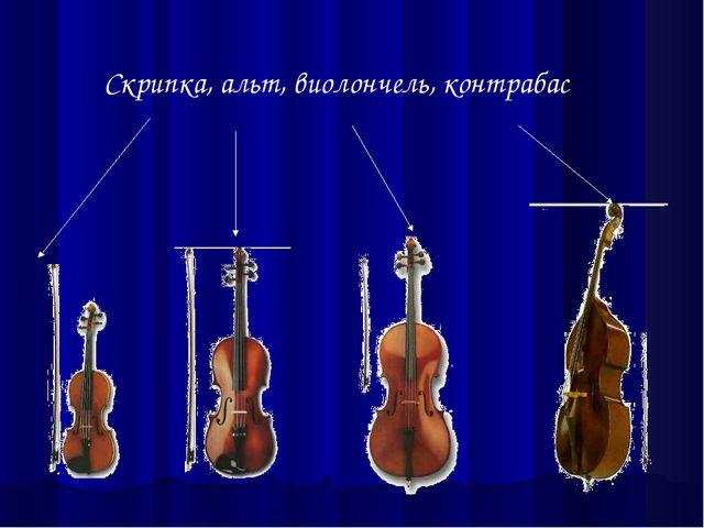 Скрипка, альт, виолончель, контрабас