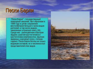 """Пески Берли """"Пески Берли"""" - государственный природный заказник, был образован"""