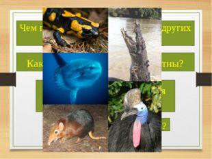 Чем позвоночные отличаются от других животных? Какие позвоночные вам известн