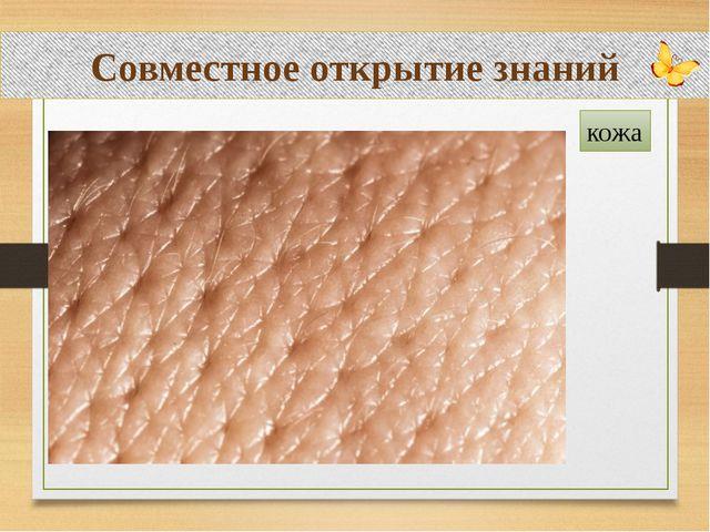Совместное открытие знаний кожа